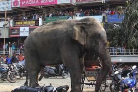 印度大象发狂暴踩小汽车大闹街头