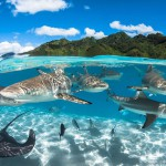 2016水下摄影大赛 黄金海马夺冠