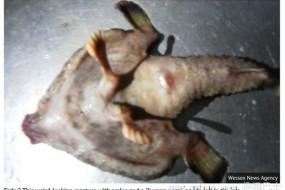 人鼻双脚怪鱼 加勒比海捕获超自然生物