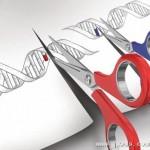基因编辑被列入大规模杀伤性武器