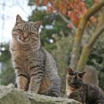 科学家欲编猫语字典帮人与猫顺畅沟通