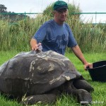 英184岁陆龟全球最长寿 为迎接王室首次洗澡