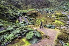哥斯达黎加史前侏罗纪秘境探险 树叶雨伞般大