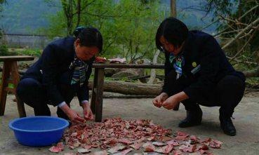 """重庆老太藏柴堆两万块  全被老鼠""""磨牙"""""""