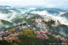 日本樱花季 春樱盛放美如仙境