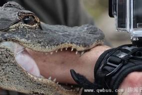 主持人做示范突遭短吻鳄咬住手臂