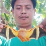 泰国发现色彩艳丽奇特蝙蝠 为濒危彩蝠