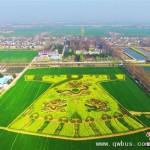 农民油菜地种出巨幅彩色龙袍迷宫图案