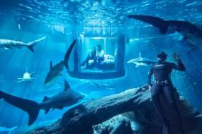 世界首个水下鲨鱼卧室开放  让旅客同鲨鱼共眠