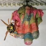 神奇:黄蜂竟筑出五颜六色彩色蜂巢