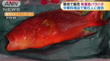 菜场毒鱼侧牙鲈被买走 日本举国追查