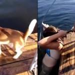 狗狗误认主人溺水 跳下河奋力咬头发拖上岸