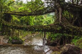 印村民河上搭建不会腐烂的植物桥