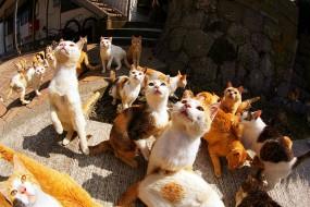 日本猫岛猫咪数量是人类6倍