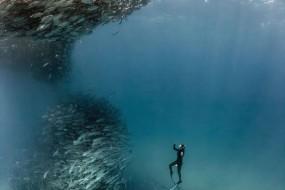 海底近距离拍鱼群漩涡 场面震撼