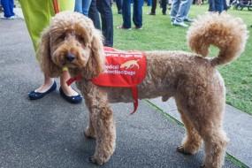 狗狗嗅出糖尿病和癌症 源于患者身上挥发性化合物