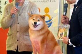 日本柴犬Maru当旅游大使获政要接见