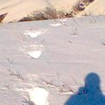 普京度假近距离遭遇雪怪 一家三口体型壮硕