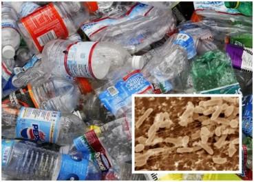 科学家发现一种细菌可分解塑胶