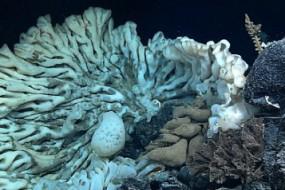 海底发现史上最大海绵:大如货车