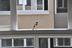野鸟光临客厅育雏 屋主陪伴1个月不忍开灯