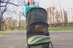 女子受聘带宠物乌龟散步 时薪10美元