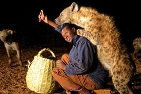 非洲神秘喂狼人 野狼对其俯首帖耳