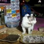 韩国流浪猫吃食被直播 大批粉丝围观