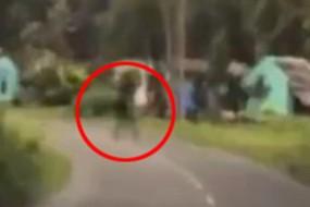 司机拍到模糊身影横穿公路惊魂一刻