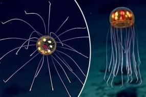 海洋最深处诡异生物:如外星怪客