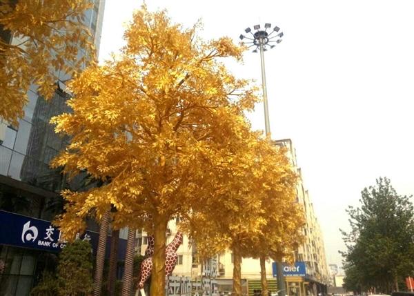 """郑州街头现整排""""黄金树"""" 市民:阳光照耀晃瞎眼-趣闻巴士"""
