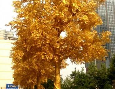 """郑州街头现""""黄金树"""" 市民估计价值不菲"""