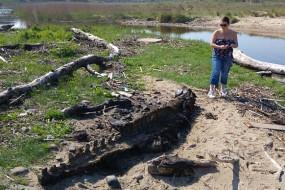 英海岸现巨型海怪尸体 形似腐木身世成谜