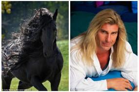 一佛里斯成年公马成世界最帅马   皮毛油亮配种高达3万元