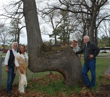 专家揭秘美国弯曲树形成之谜