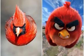 摄影师拍到愤怒小鸟 与游戏造型神似