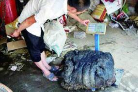 河北村民发现160斤太岁 收藏家欲办太岁博物馆