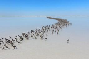 土耳其大量火烈鸟似排兵布阵 场面壮观