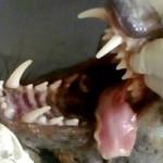 国外农民杀死一只吸血怪兽 兽医看后也傻眼