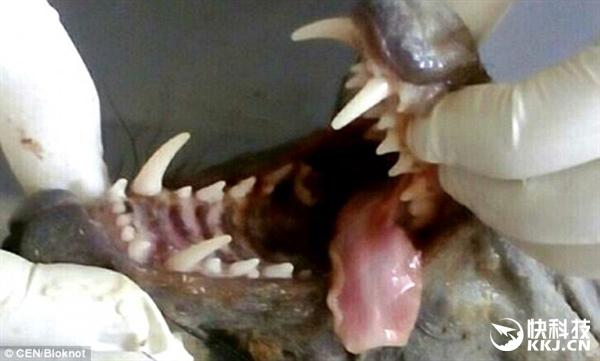 国外农民杀死一只吸血怪兽:兽医看到也蒙圈了-趣闻巴士