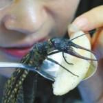 中国巨型怪虫首上吉尼斯 越中巨齿蛉翅展超21公分