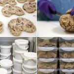 英最大大脑银行存上千大脑标本