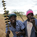 非洲美味:烤老鼠串