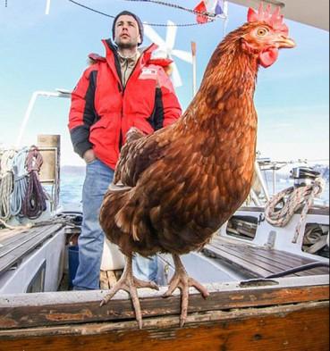 小伙带宠物鸡环游世界 路上还有蛋吃