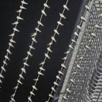 一根电线上万只燕子整齐排列 十三年前有同样场景