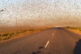 俄罗斯30年一遇蝗灾 蝗虫如乌云遮天蔽日