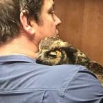 rescue-owl-hugs-man-gigi-douglas-pojeky-41