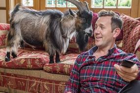 养只山羊做宠物 专家:它是人类最好朋友