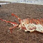 尼斯湖边惊现怪物残骸:水怪尸体?