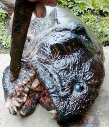 俄发现怪异大鱼:外形恐怖满嘴利齿
